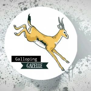 Galloping Gazelles